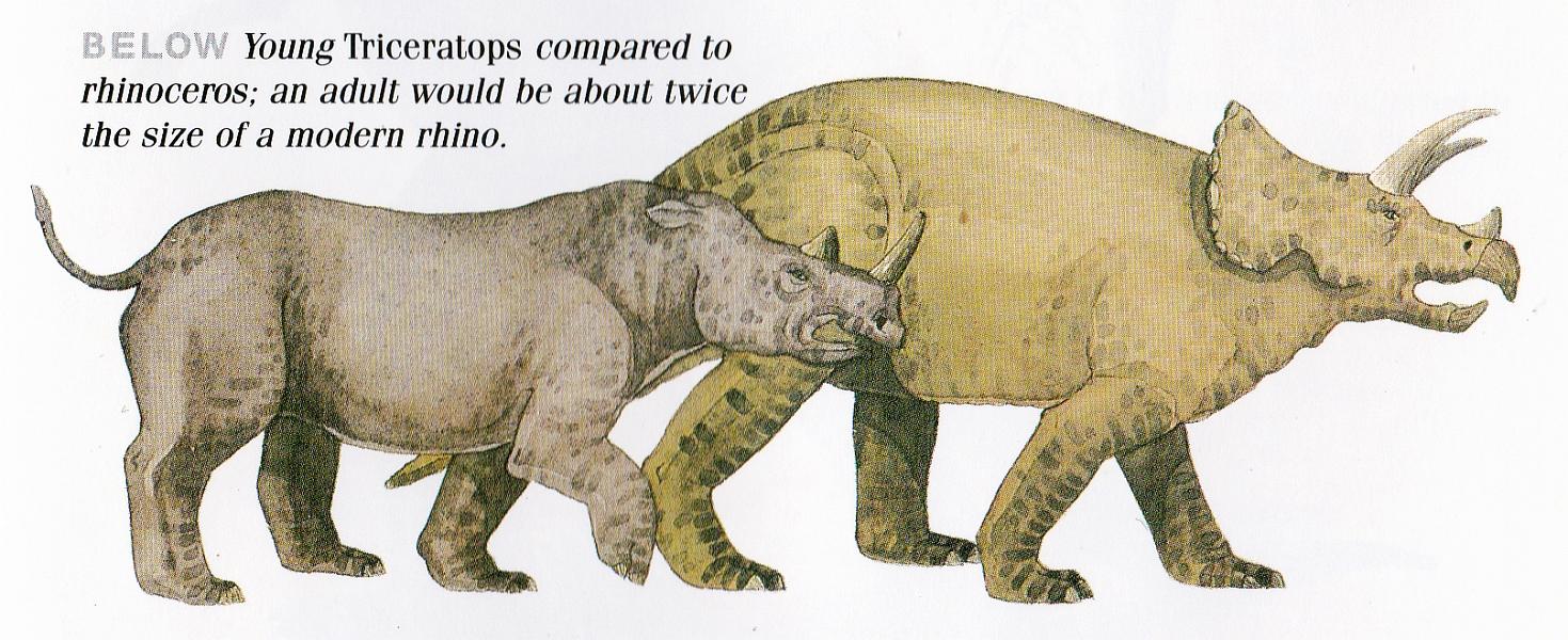 Triceratops by Elizabeth Sawyer