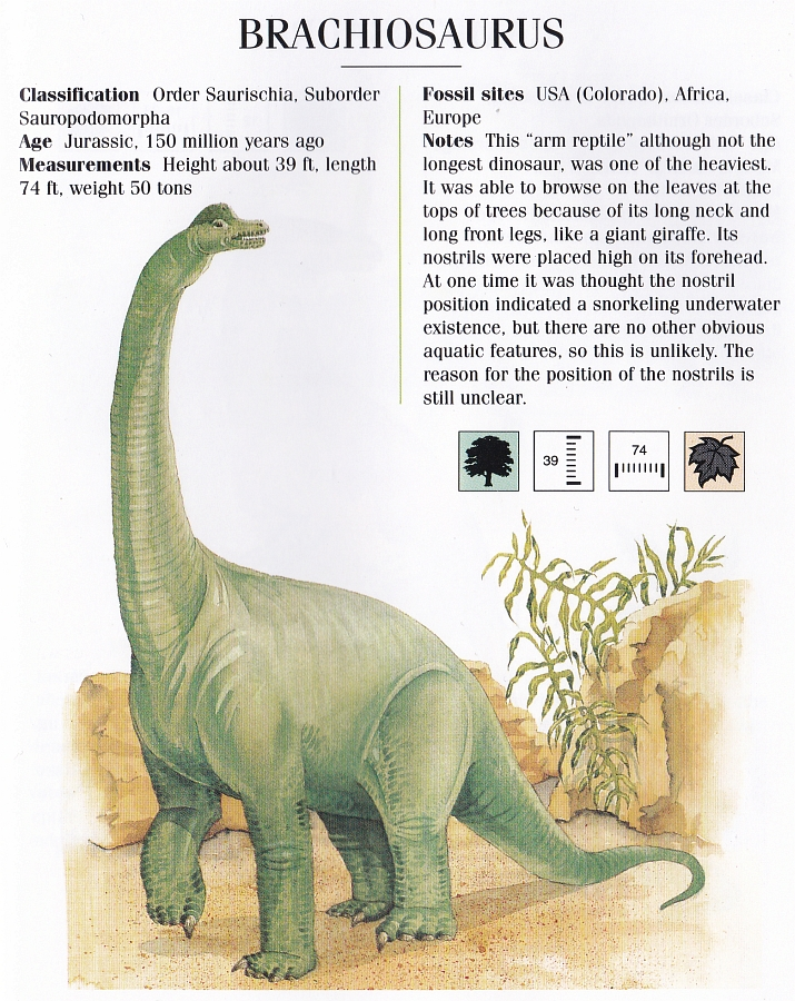 Brachiosaurus by Elizabeth Sawyer