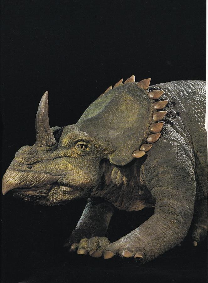 Centrosaurus by Steve Morris / Peter Minister