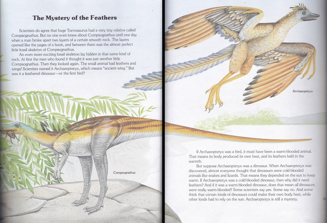 Compsognathus and Archaeopteryx by Christopher Santoro