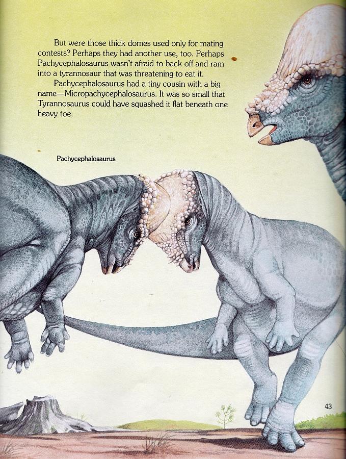 Pachycephalosaurus by Christopher Santoro