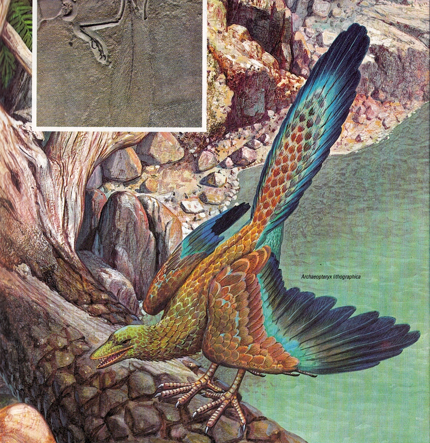 Archaeopteryx by Andrea and Luciano Corbella