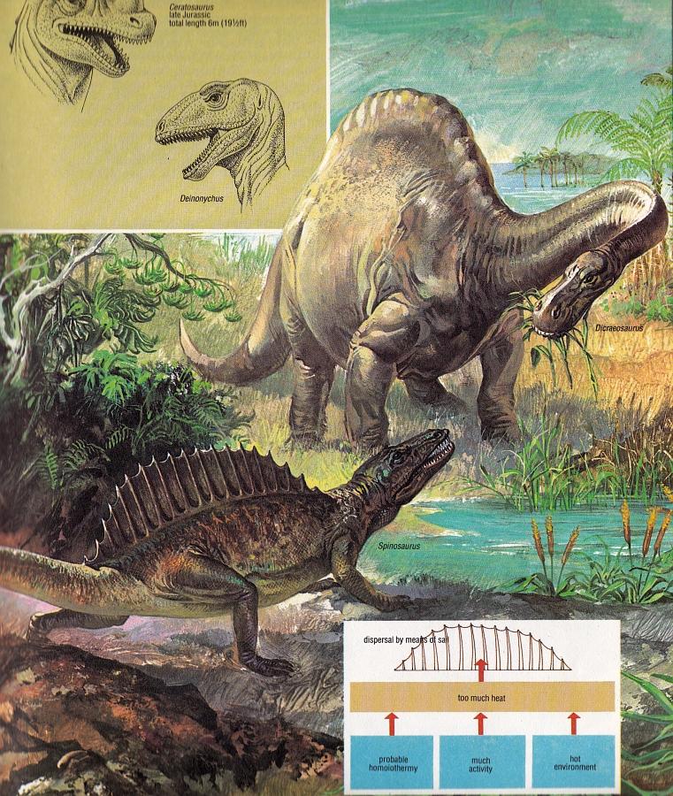 Spinosaurus and Dicraeosaurus by P Cataneo